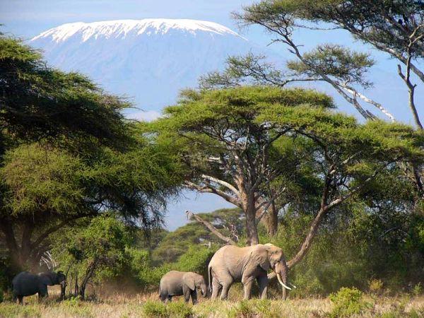 Mont Kenya, Massaï Mara, les lacs, Amboseli - Le Kenya essentiel