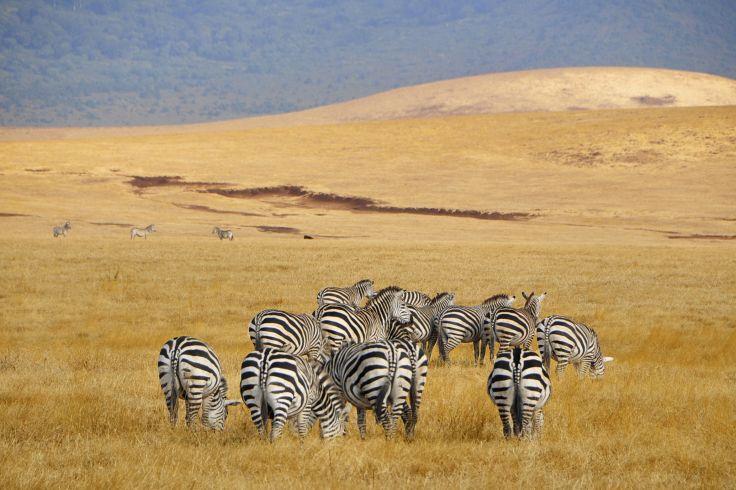 Parc de Tsavo - Kenya