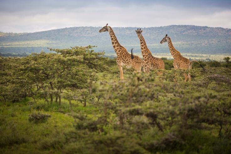 Massai Mara - Kenya