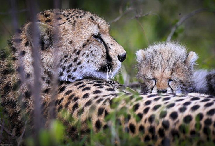 Réserve nationale du Masai Mara - Kenya