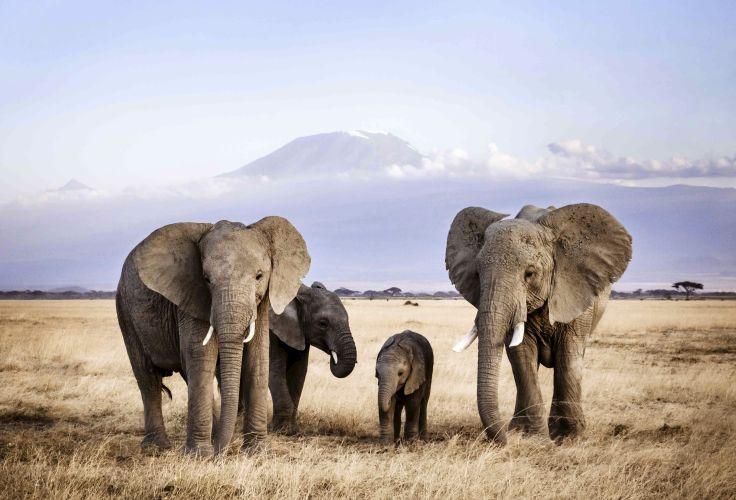 rencontres secrètes au Kenya