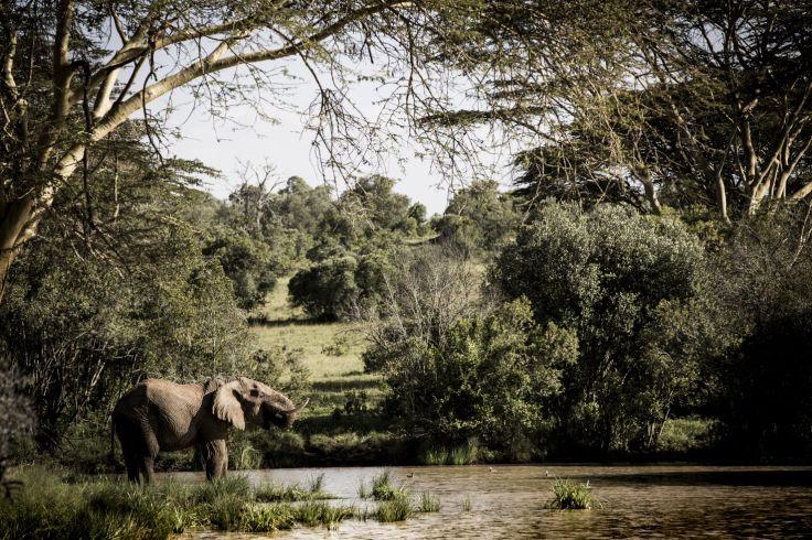 Laikipia - Kenya