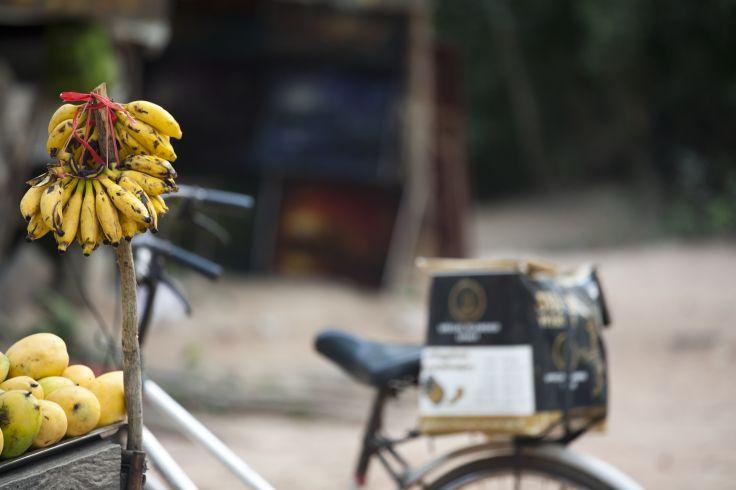 Ta Prohm - Angkor - Cambodge