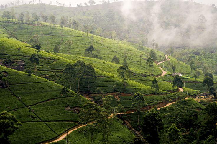 Région de Nuwara Eliya - Sri Lanka