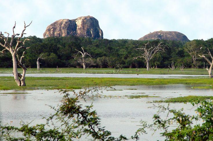 L'île des planteurs - Pour un premier voyage au Sri Lanka