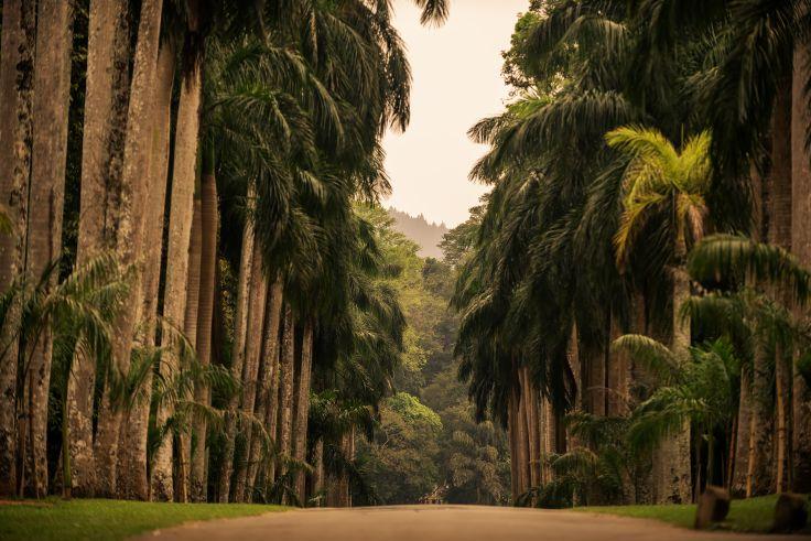 Jardin botanique de Peradeniya - Kandy - Sri Lanka