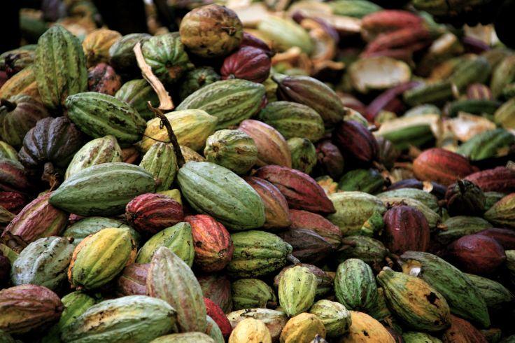 Fève de cacao - Madagascar