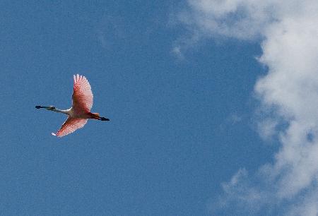 Séjour au Mexique : Tulum, sans laisser de trace