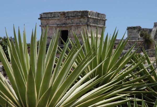Sur Mesure au Mexique : Aventure au pays Maya