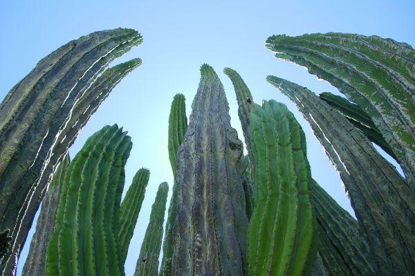 Sur Mesure au Mexique : Road trip en Basse Californie