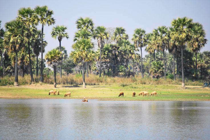 Autour de Bagan - Birmanie