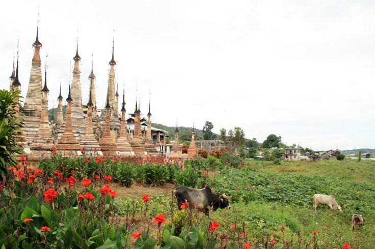 Takkhaung Mwedaw - Sagar - Birmanie
