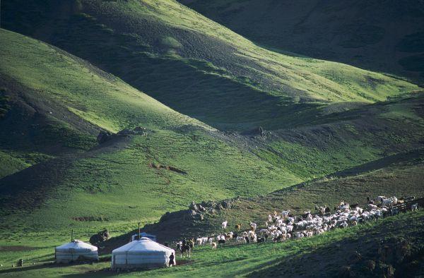 Sous le ciel étoilé de Mongolie