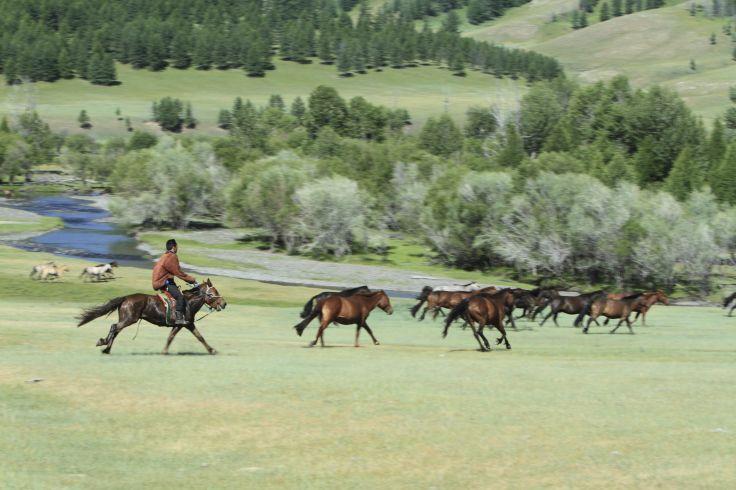 Vallée de l'Orkhon - Mongolie