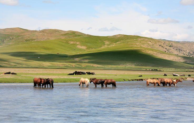 lac d'Ogii Nuur - Mongolie