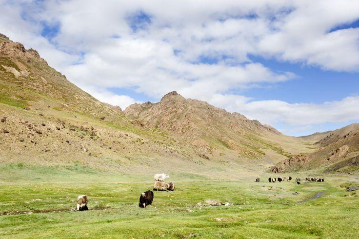 Parc national de Gobi Gurvan saikhan - Mongolie