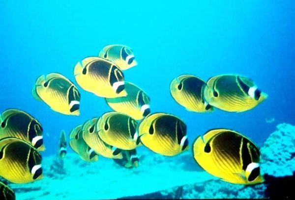 Séjour à Maurice : Rodrigues et sa barrière de corail