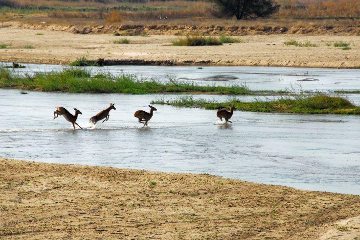 Parc National Luangwa - Zambie