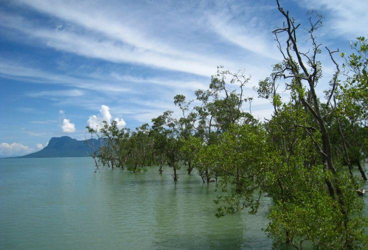 Parc national de Bako - Bornéo - Malaisie
