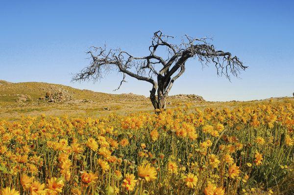 Sur Mesure en Namibie : La traversée des 4 déserts namibiens