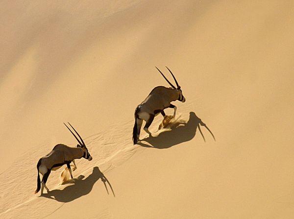 Les chemins du gemsbok