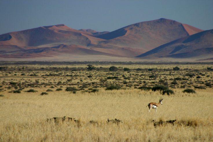 Entre dunes et océans - Premier voyage en Namibie