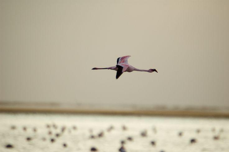 Walvis Bay - Namibie