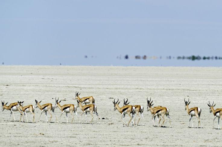 Parc national d'Etosha - Nambie