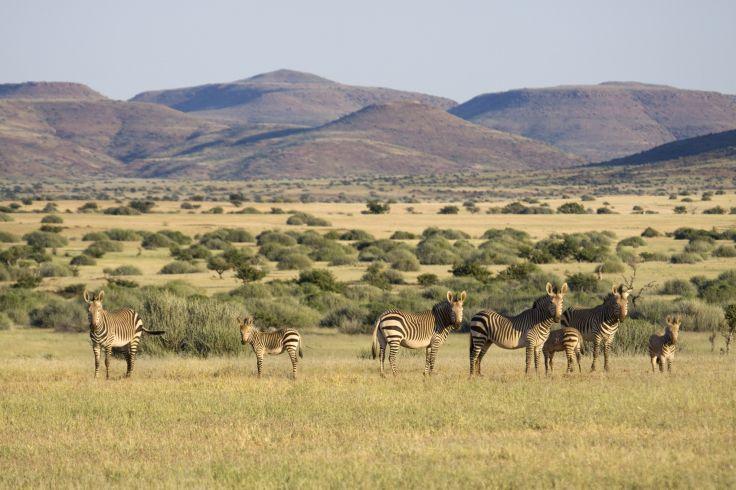 Palmwag - Damaraland - Namibie