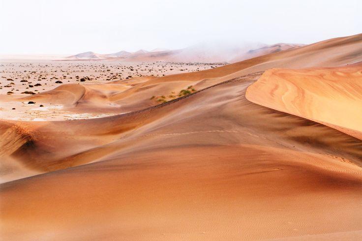 Walvis - Région de Swakopmund - Namibie