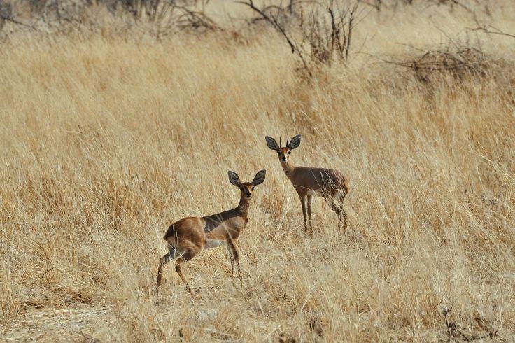 Parc national d'Etosha - Namibie