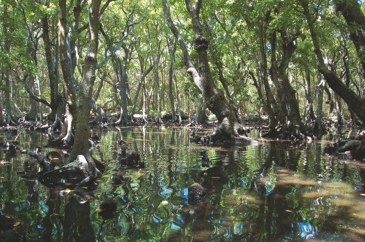 Ile d'Ouvéa - Nouvelle Calédonie