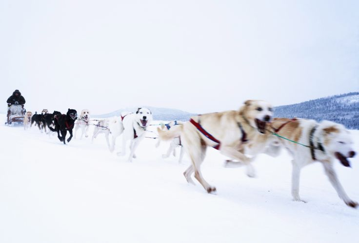 Laponie - Norvège