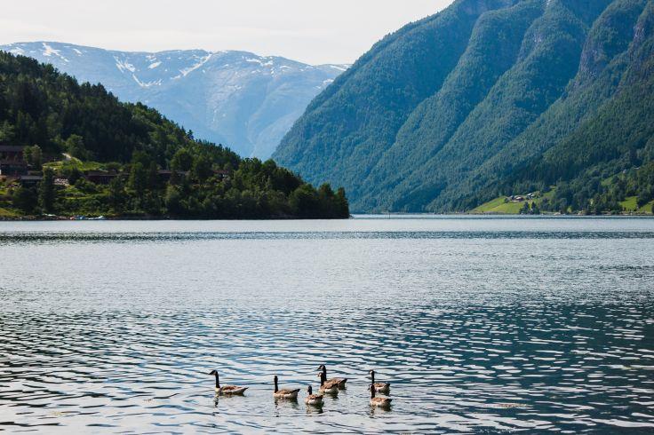 Ulvik - Norvège