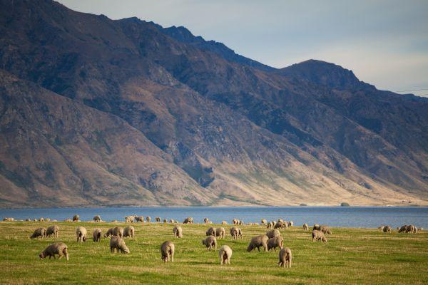 De Christchurch à Auckland - Un amour de Nouvelle-Zélande