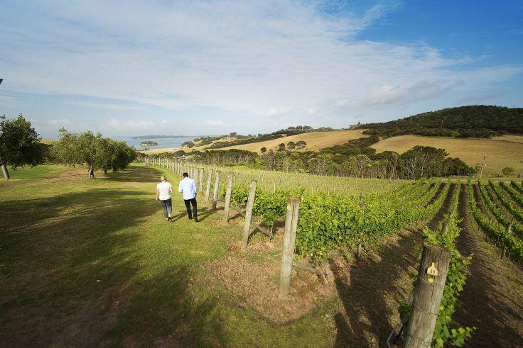 Vignobles de l'île de Waiheke - Auckland - Nouvelle-Zélande