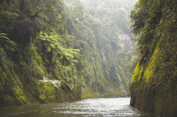 Rivière Wanganui - Ile du Nord - Nouvelle-Zélande