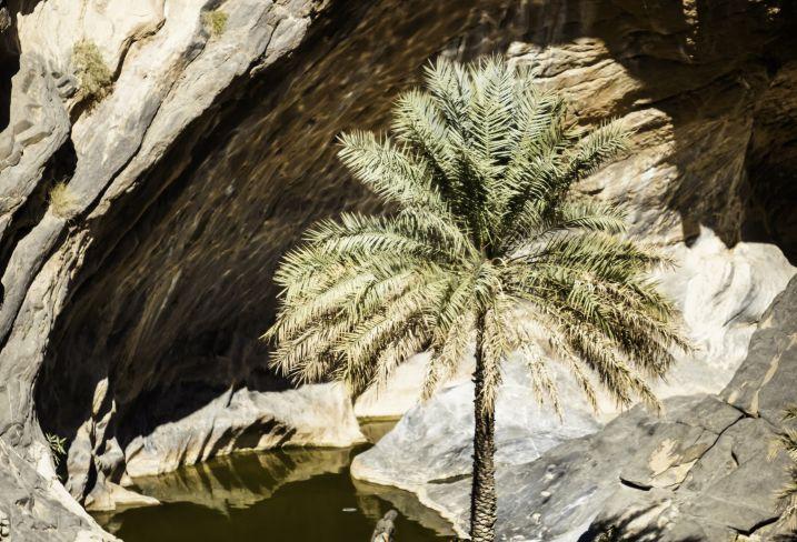 Wadi Bani Awf - Oman