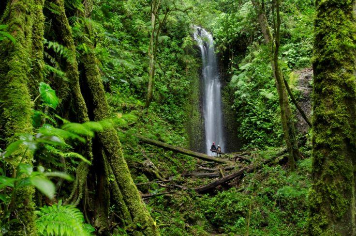 Finca Lerida - Boquete - Panama