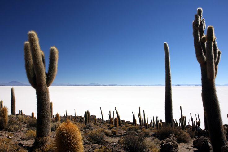 Incahuasi - Salar d'Uyuni - Bolivie