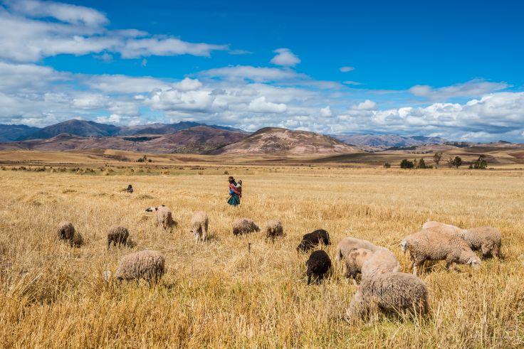Région de Cuzco - Pérou