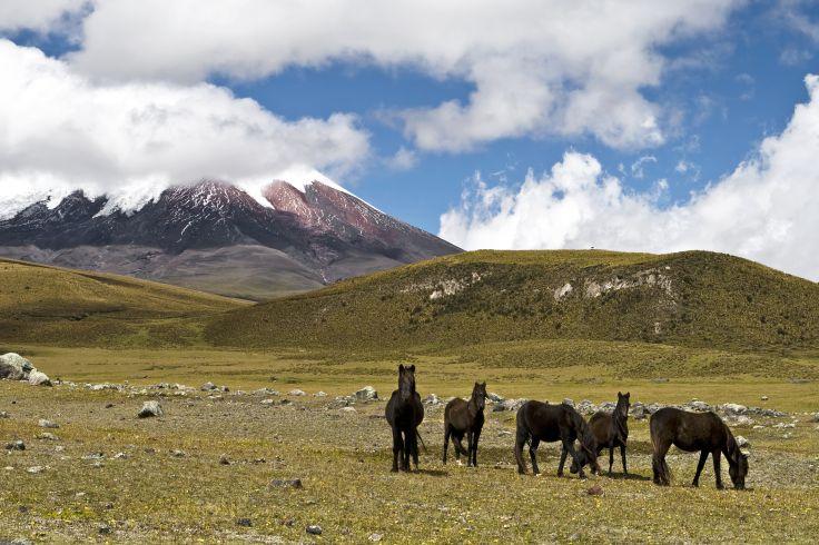 Volcan Cotopaxi - Equateur