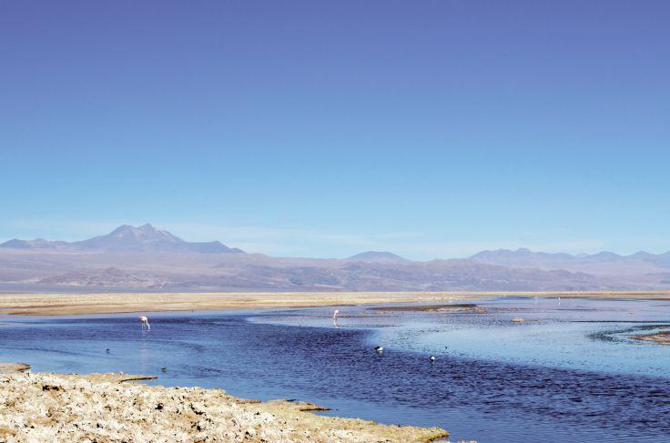 Laguna Cejar - Antofagasta - Chili