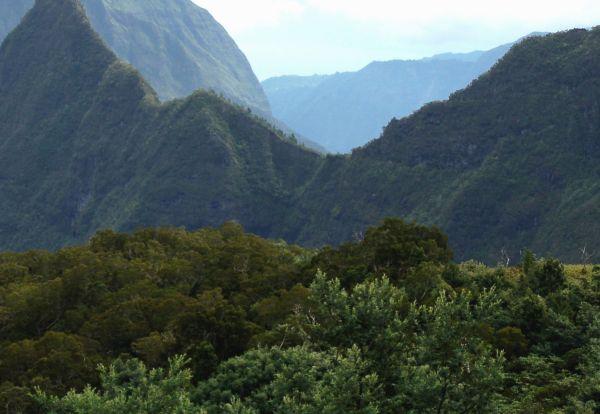 Sur Mesure à La Réunion : L'Ile verte