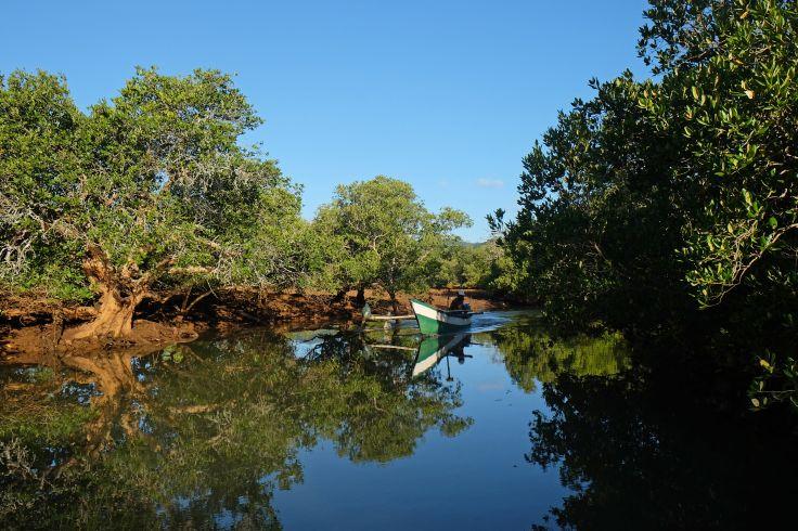 En bateau dans la mangrove - Mayotte