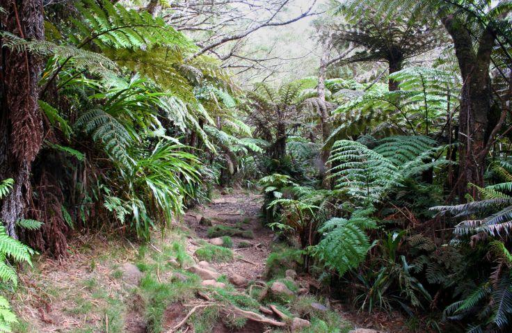 Forêt de Bélouve - Salazie - La Réunion