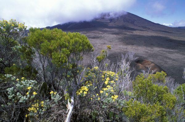 Sur Mesure à La Réunion : La Réunion : île-volcan