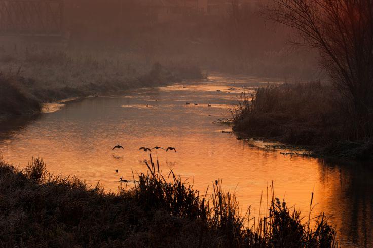 Delta du Danube - Roumanie