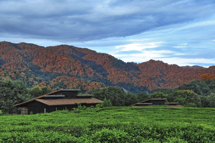 Nyungwe - Rwanda