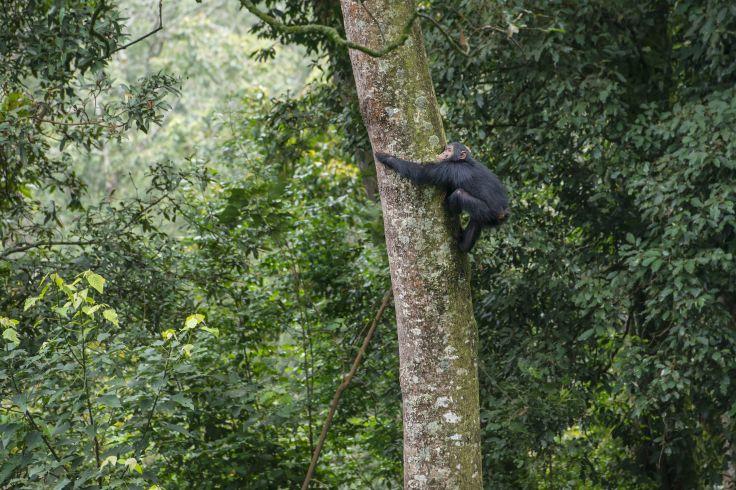 Parc national de Nyungwe - Rwanda
